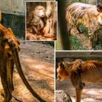 Kaduna zoo bars Journalists from Entering facility after Photos of Starving Lion went Viral