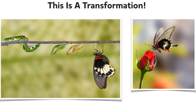 Transformation sample - the process of turning a caterpillar into a butterfly