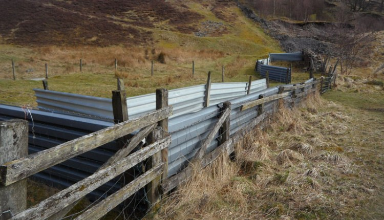 Modern sheepfold, Stanhope Burn