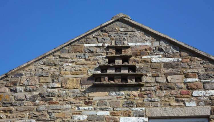 Dovecote in farm building. East Blackdene