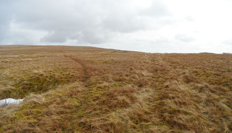 Take footpath to left on Dodder Hill