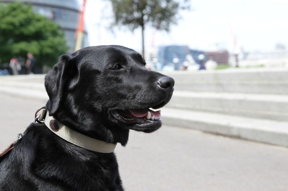 Office Dog 3
