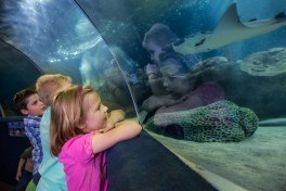 Visitors at the Greater Cleveland Aquarium get up close and personal with exotic sea life.