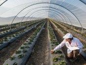 high-tech-greenhouse