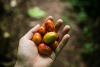 Ciruela (similar to a plum) was one of my favorite new fruit discoveries. Fruit is free in the jungle because it is growing everywhere. I found a tree and was eating these all day long.