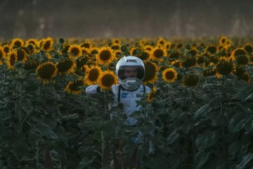sunflower spaceman