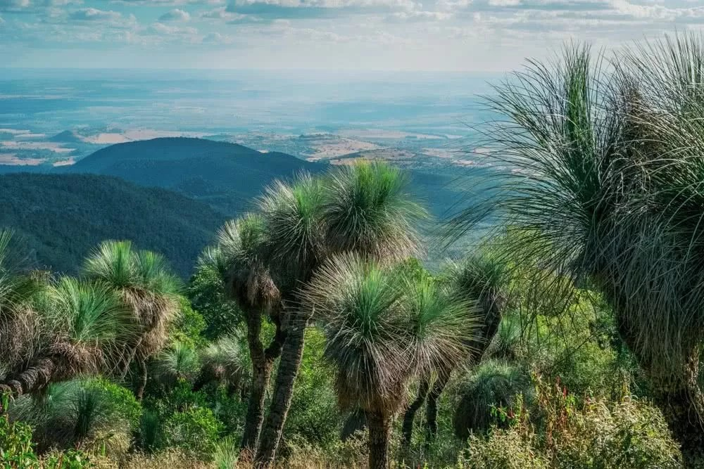 Crisp Air And Towering Trees // Bunya Mountains (QLD), Harry Candlin, grass trees, mountain view
