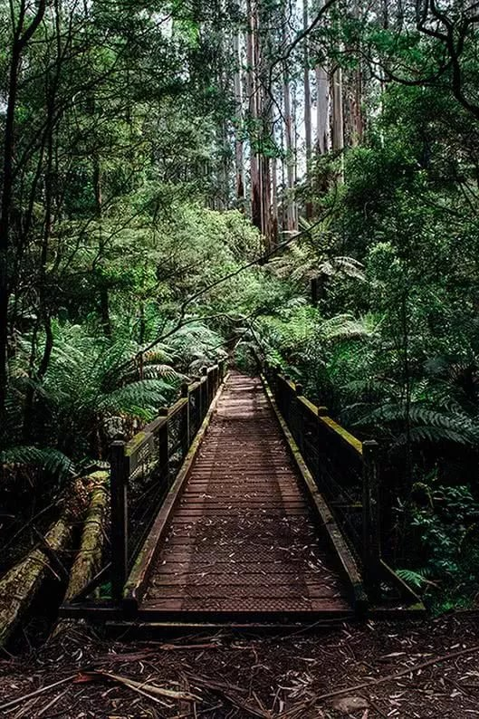 day in the dandenong ranges, Nathan Giles, walkway forest