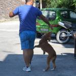 straat hond zwerf hond