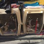 laadruimte vliegtuig straat hond griekenland