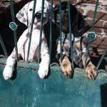 pups puppie puppy lesbos griekenland