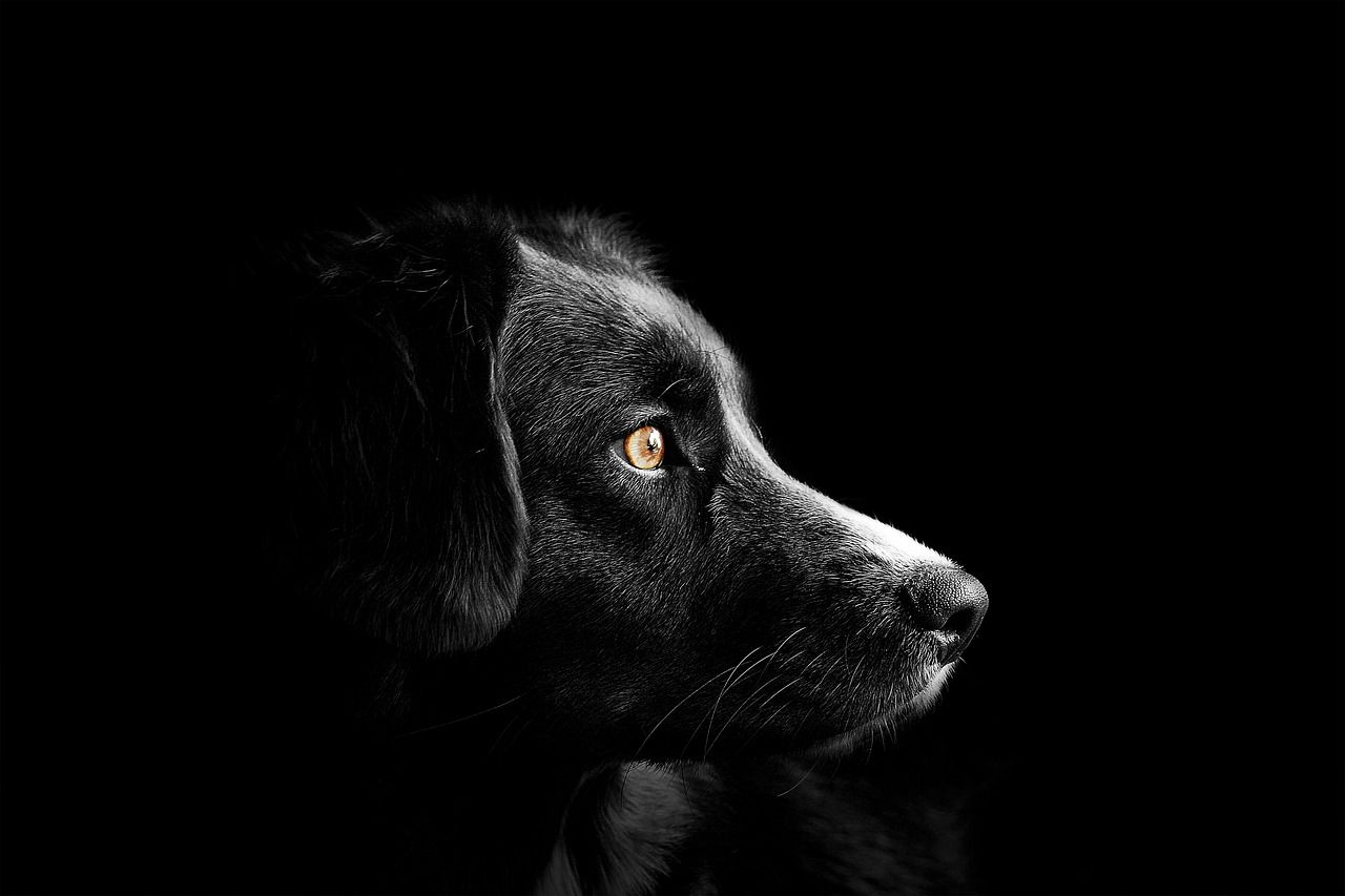 Cute Puppies Sleeping Wallpaper Can Dogs Sense Evil Spirits