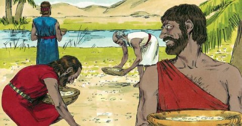 who collected the manna