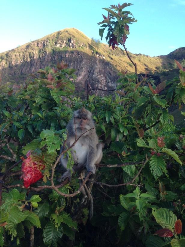 Monkey at Mount Batur