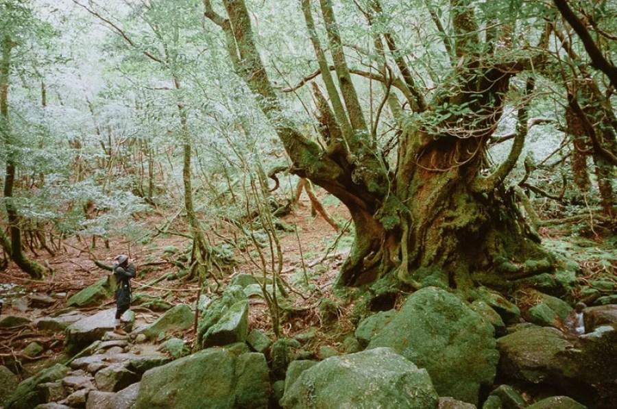 yakushima_travel_photography_12