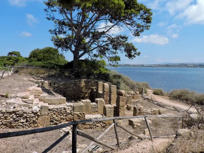 alberi svettanti e i resti fenici sull'isola di Mozia: la storia e la natura in Sicilia