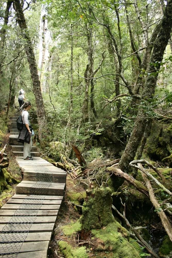 Scorcio nel parco delle Cradle Mountains, in Tasmania