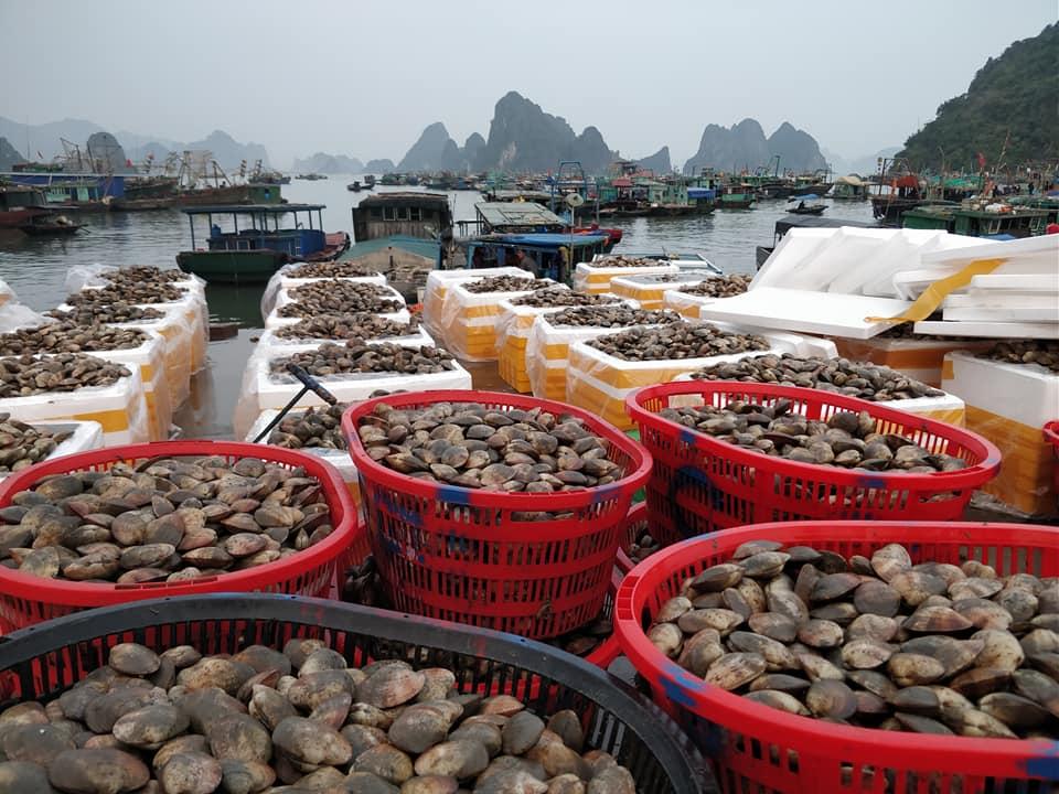 Il porto di Cai Rong nella baia di Bai Tu Long