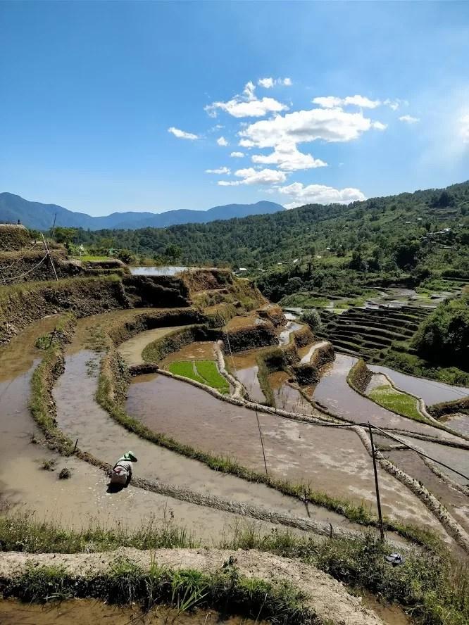 Le terrazze di riso di Maligcong vicino Bontoc