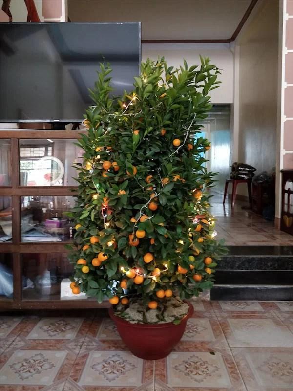 Mandarini: una tradizione tipica del Tet