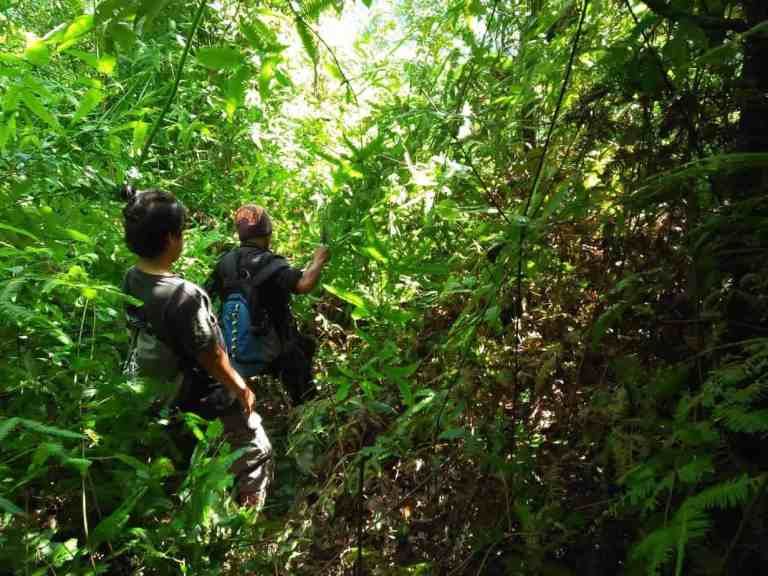 Jungle Trekking Batu Katak