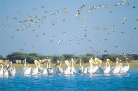 Nal Sarovar Cranes