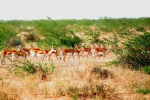 Deer waliking across grassland