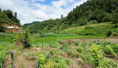 De biolgoische boerderij Herb Nepal