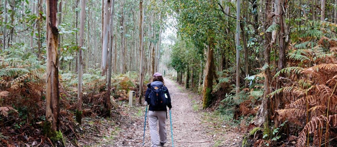 Ik in een eucalyptusbos in Noord Spanje tijdens de Camino de Santiago