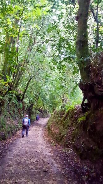 Een schitterend bospad op de Camino del Northe
