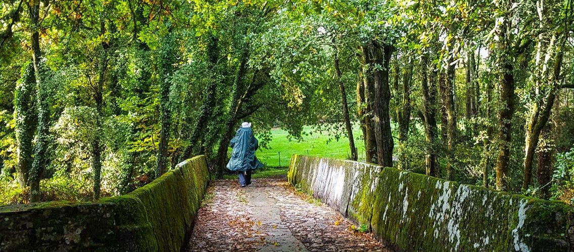 Een man steekt een brug over omringt door de natuur