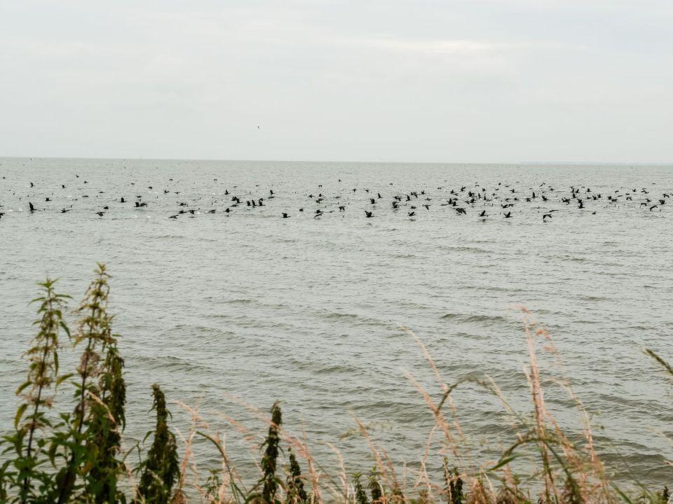 Een groep vogels op de Gouwzee nabij Volendam.
