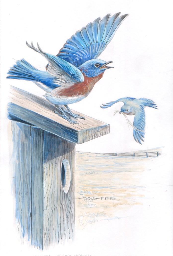 Birds flying near a birdhouse