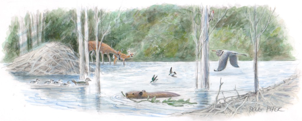 An illustration of a lake habitat, showing a beaver and other woodland creatures.