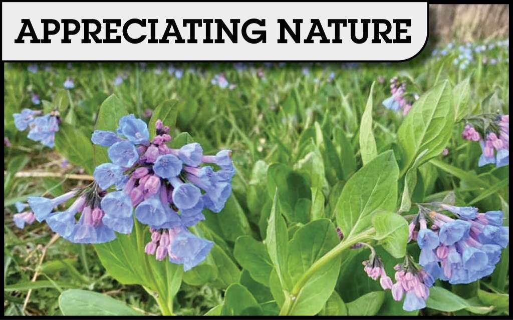 appreciating nature columnists.