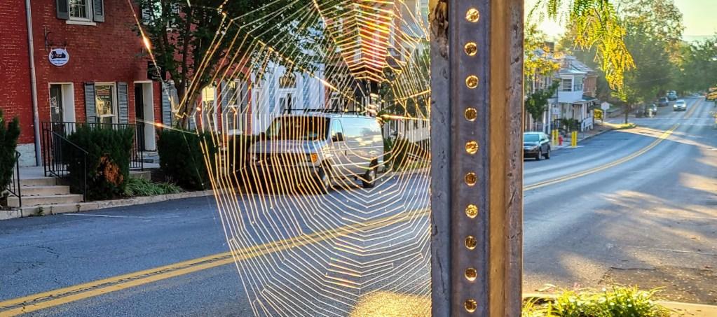 A spiderweb backlit by sunlight on German Street in Shepherdstown.
