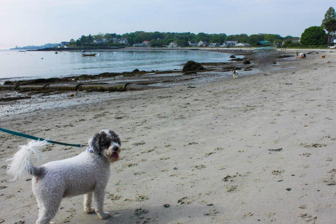 Willard-Beach