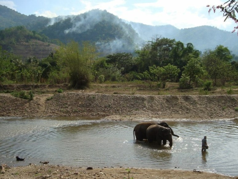 elephants-and-a-mahout