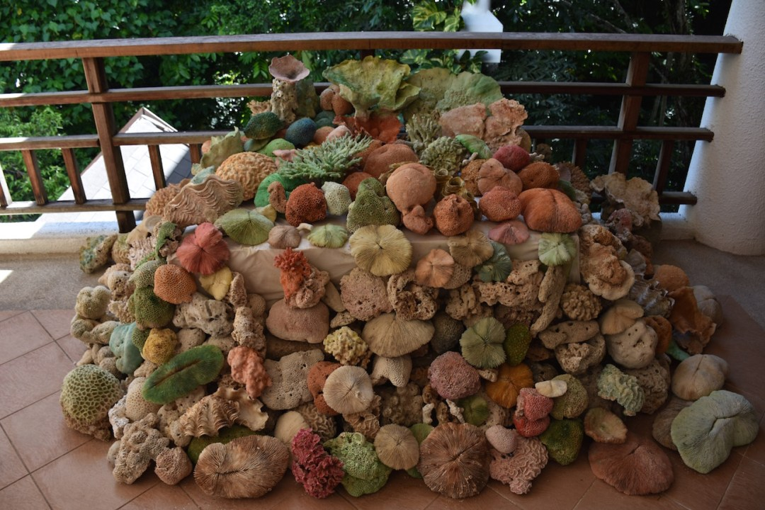 The Andaman Langkawi Malaysia Coral Conservation
