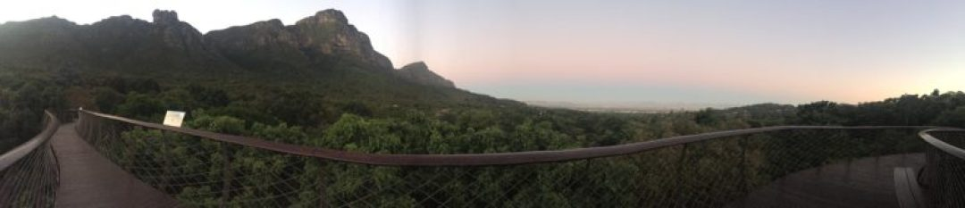 Cape-Town-Kirstenbosch-Tree-Top-Walk 10 AWESOME THINGS TO DO IN CAPE TOWN, SOUTH AFRICA