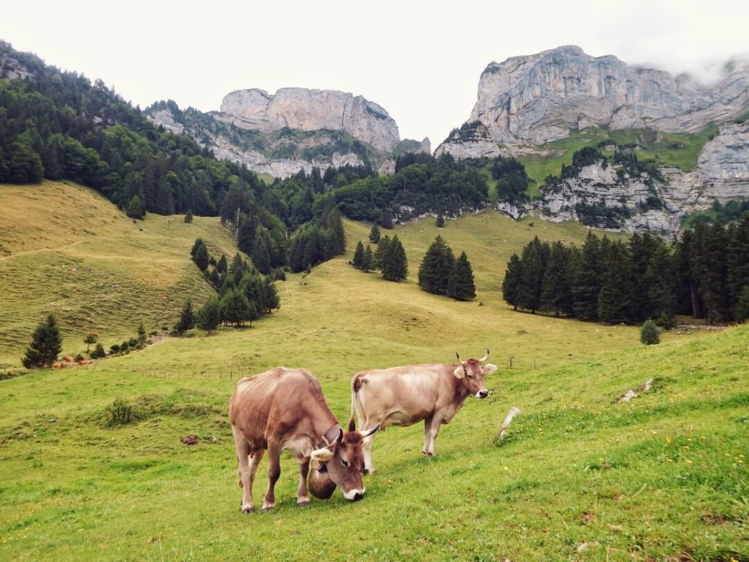 Hiking for Cheese in Switzerland