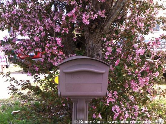 Bunnys_Mailbox