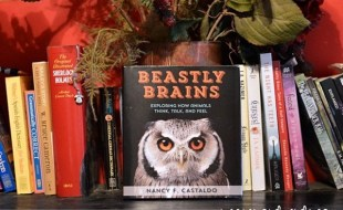Beastly Brains: Exploring How Animals Think, Talk, and Feel by Nancy Castaldo