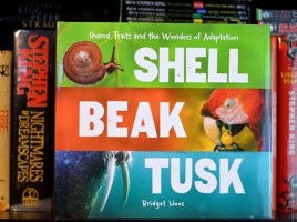 Shell, Beak, Tusk: Shared Traits and the Wonders of Adaptation by Bridget Heos