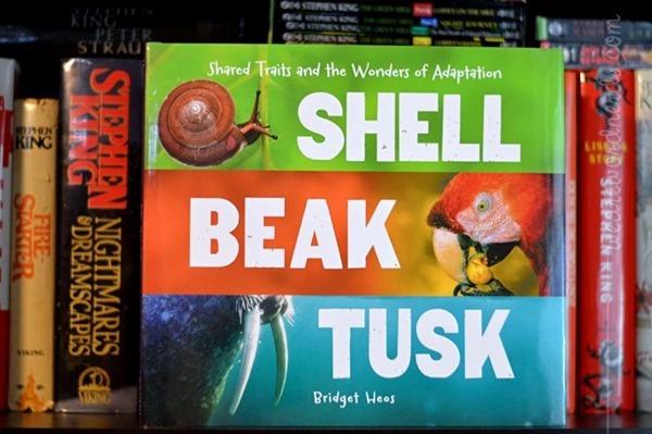 Shell, Beak, Tusk: Shared Traits and the Wonders of Adaptation by Bridget Heos