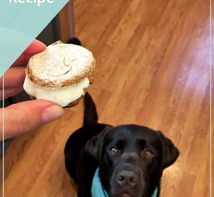 Video: DIY Ice Cream Sandwich for Dogs Recipe