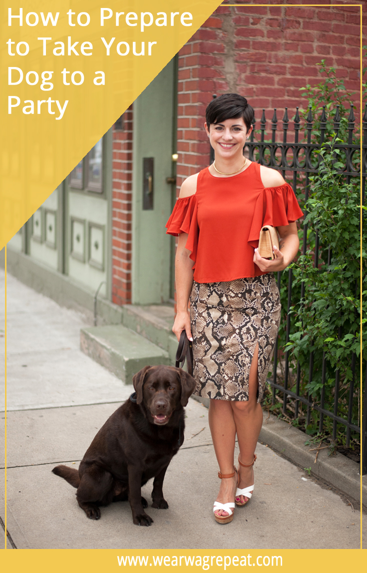 How to Prepare For Taking Your Dog to a Party