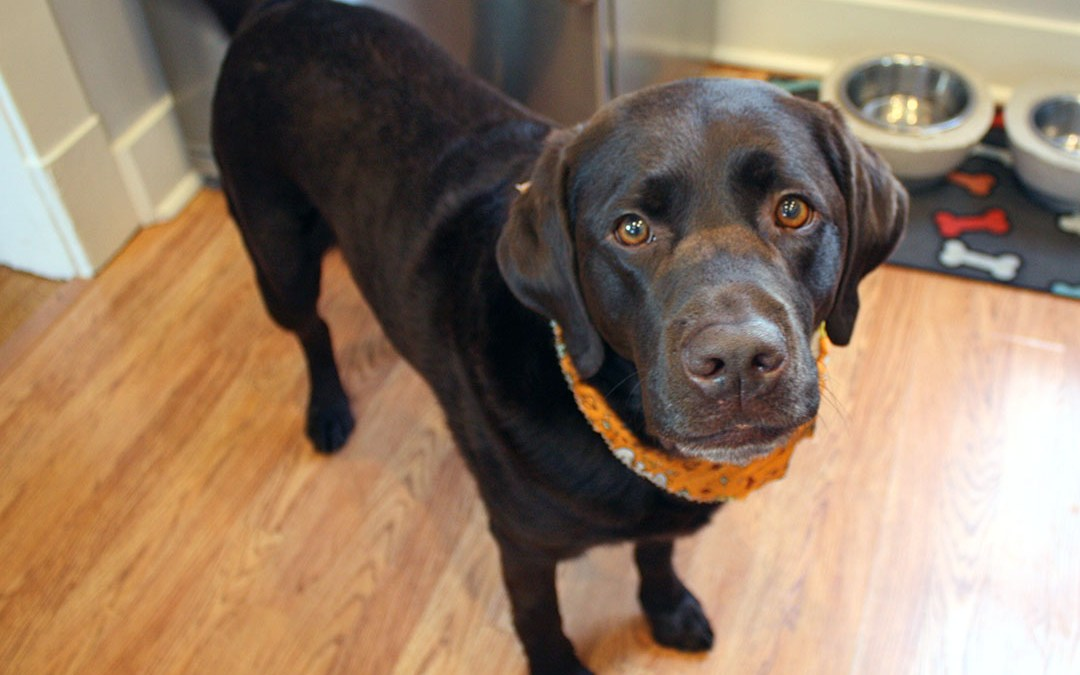 Pumpkin Pie for Dogs Recipe Inspired by a Family Favorite