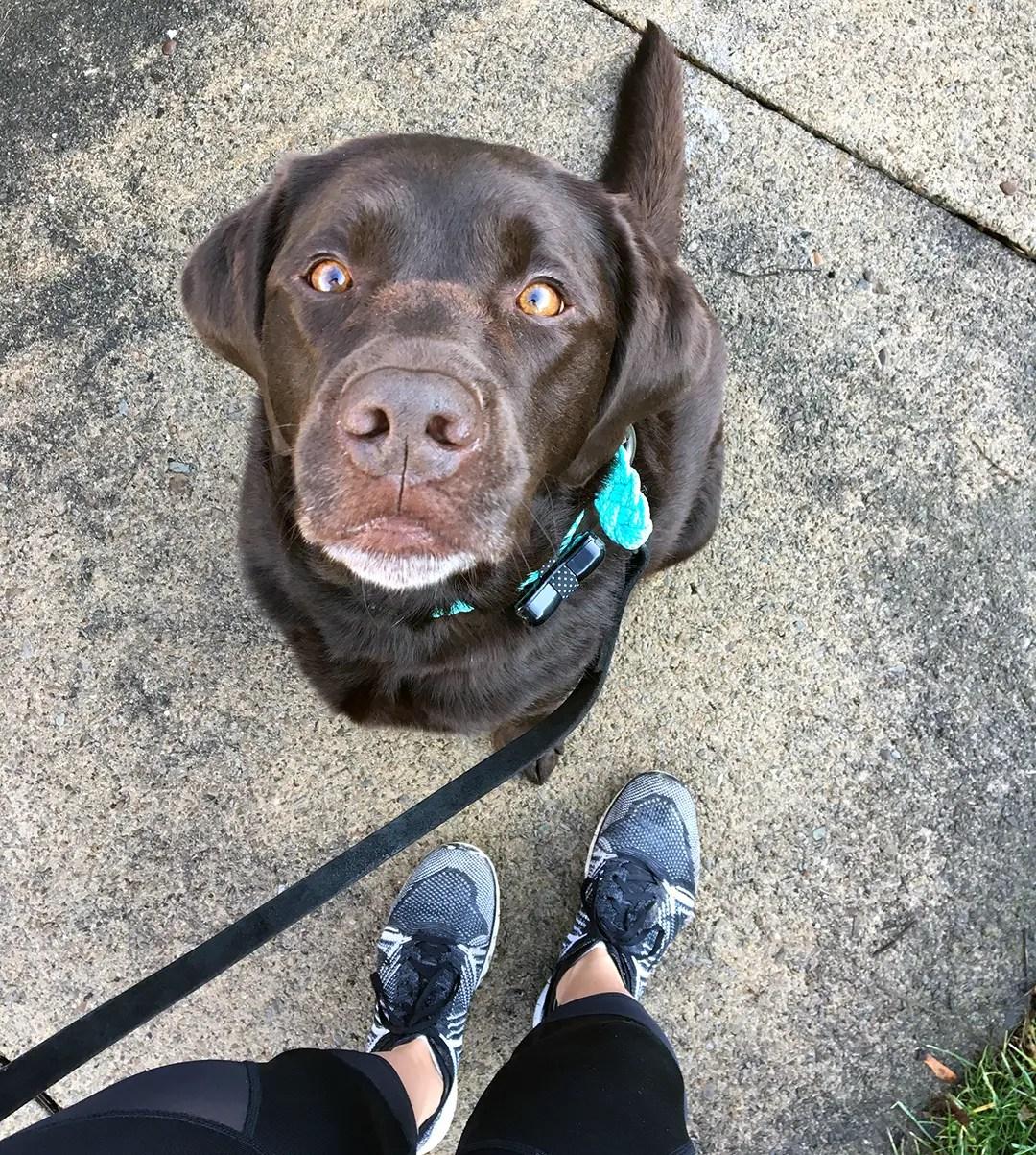 WonderWoof Dog Activity Tracker from The Grommet
