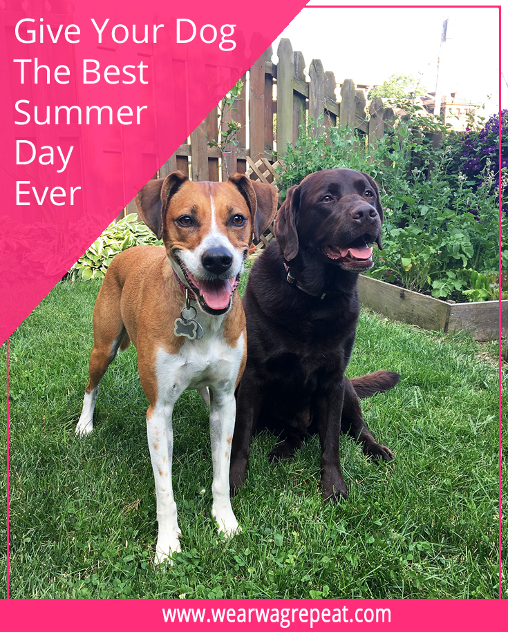 How To Give Your Dog The Best Summer Day Ever